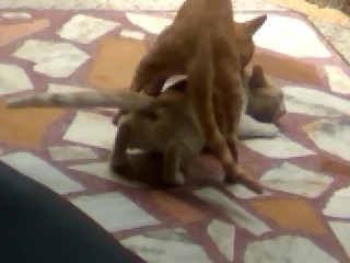Animal Sex Porn Videos
