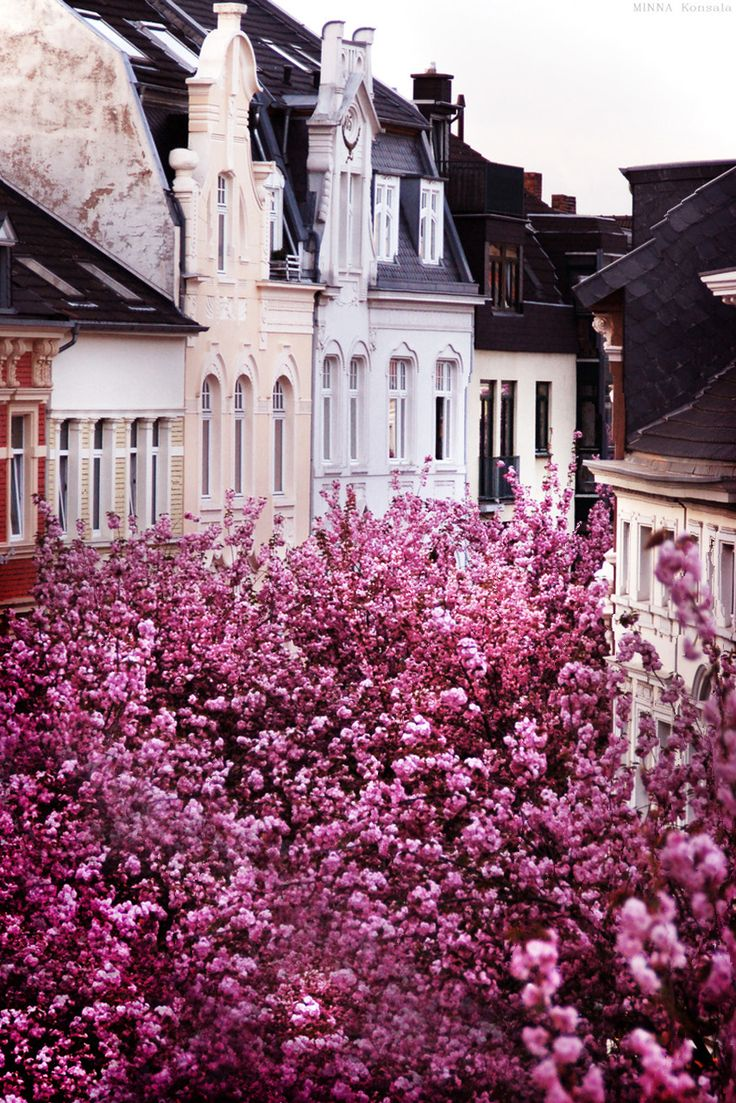 Best Cherry Blossom Pictures Ideas On Pinterest Cherry 2